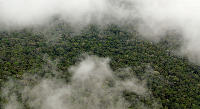 The Amazon rainforest.