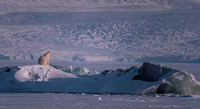 polar bear atop glacier in the Arctic.