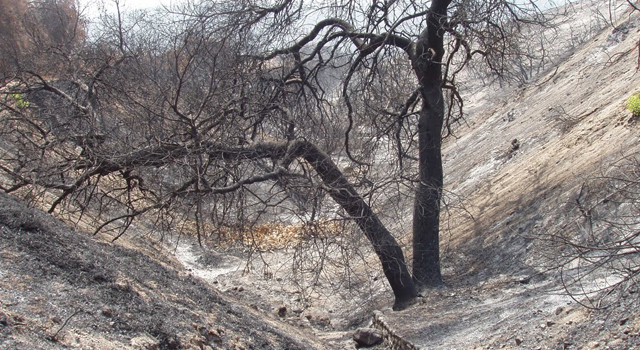 This image shows the Brown Mountain area in the Angeles National Forest on Sept. 28, 2009, shortly after the most intense part of the Station fire had died down.