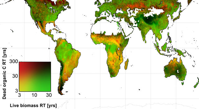 Global map of the average amount of time that live biomass carbon