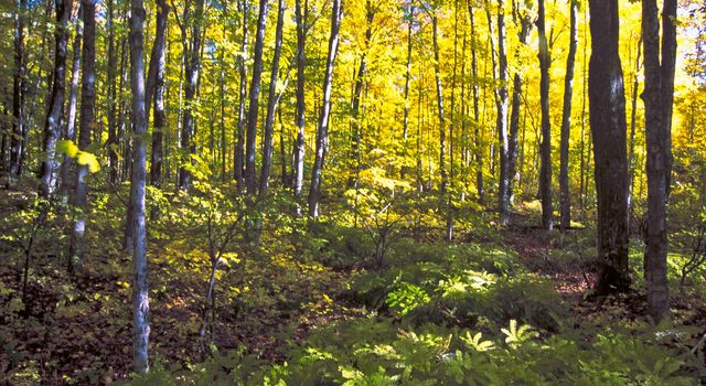 Nature's color abounds in the Hiawatha National Forest on the Upper Peninsula of Michigan during the fall.