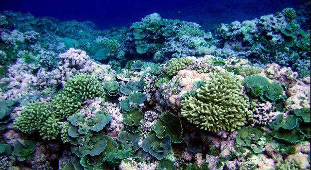 A pristine reef in American Samoa.