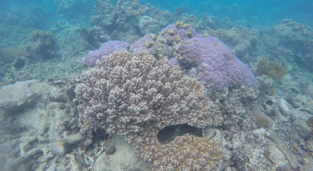 An example of healthy coral, including both hard and soft coral, in the northern region of Australia's Great Barrier Reef.