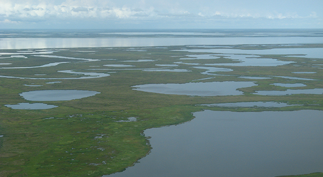 Alaskan tundra is showing the effects of melting permafrost.