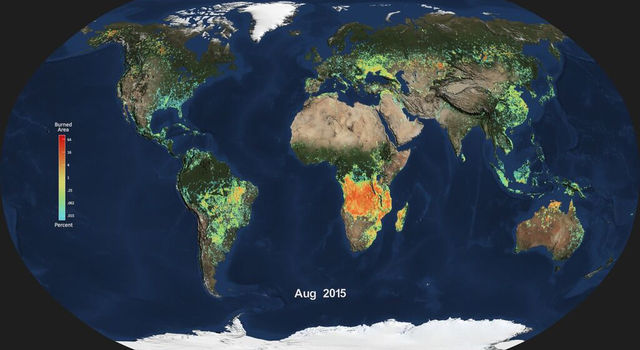Monthly average global burned area for Aug. 2015, produced from NASA's MODIS instrument.
