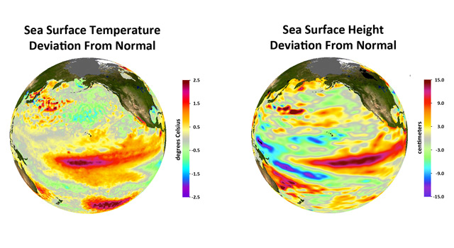 Deviations from normal sea surface temperatures (left) and sea surface heights (right)