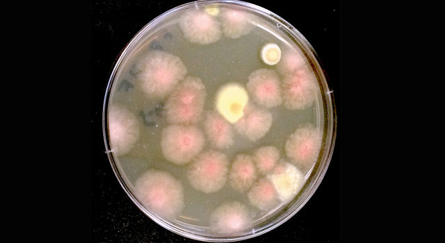 The Microbial Tracking-1 experiment sent fungi to the International Space Station to study their growth.