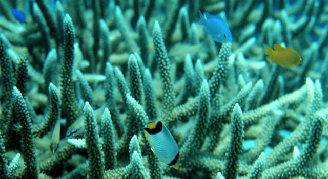 Changing ocean chemistry is reducing the carbon available to grow corals and fish skeletons