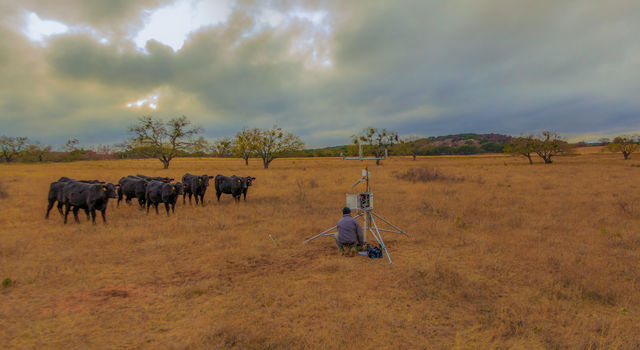 Todd Caldwell checking one of the sensors in the Texas Soil Observation Network.