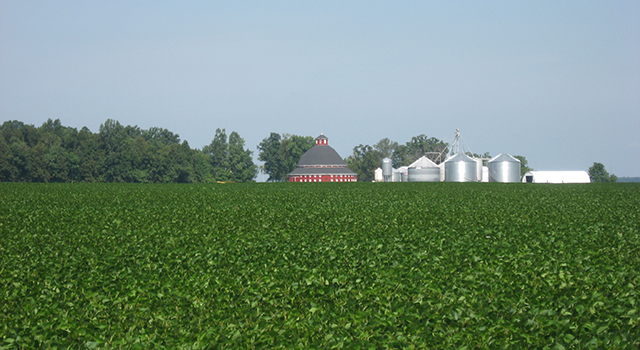 A soybean field in Ohio. Image credit: WikiMedia Commons