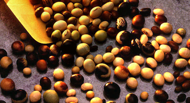Soybean seeds from the U.S. Department of Agriculture's Soybean Germplasm Collection. Image credit: USDA