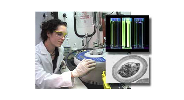 left, researcher Elizabeth Lester and a bacterial spore detector; top right, detected spores glow when exposed to ultraviolet light; bottom left, bacterial spore