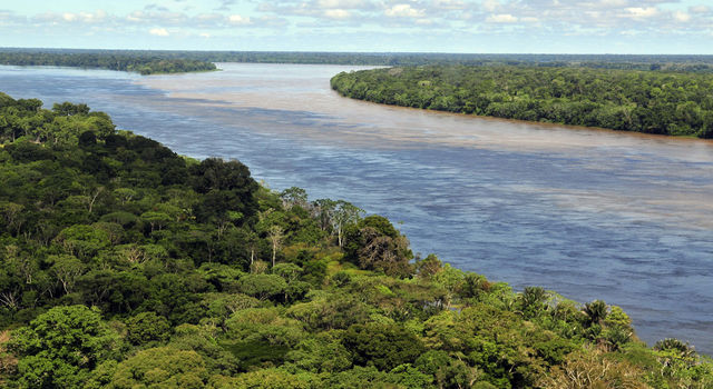 The Amazon forest and river