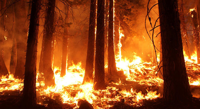 News | NASA/Forest Service Maps Aid Fire Recovery