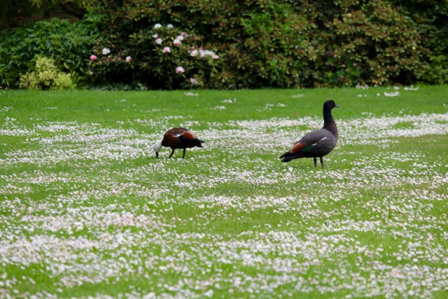 Birds in a park in Christchurch, New Zealand