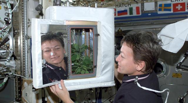 An astronaut works with a plant experiment on the International Space Station.