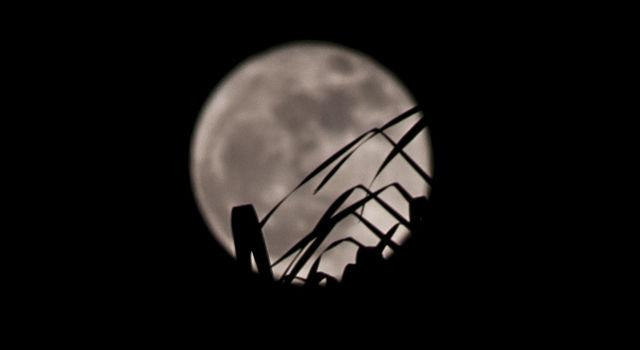 A full Moon shines behind the silhouette of palm fronds