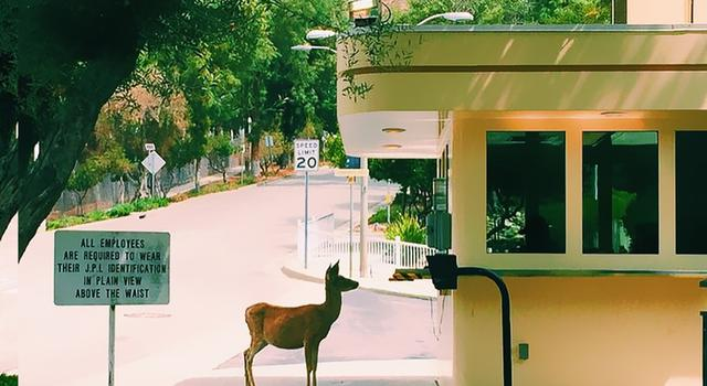 A deer at the JPL security gate